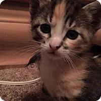 Adopt A Pet :: Franny - Aurora, CO