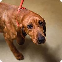 Adopt A Pet :: June - Lovingston, VA