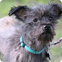 Terrier (Unknown Type, Medium) Mix Dog for adoption in Columbia, Tennessee - Troy/MS