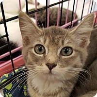 Adopt A Pet :: Gemma - Old Bridge, NJ