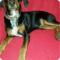 Adopt A Pet :: Lacey - Bristolville, OH