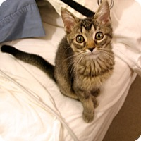 Adopt A Pet :: Jean Genie - Covington, KY