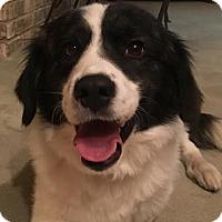 Adopt A Pet :: Perkins - Cincinnati, OH