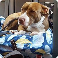 Adopt A Pet :: Dusty - Fincastle, VA
