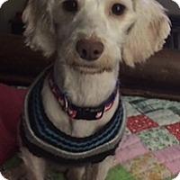 Adopt A Pet :: Jasper - Jasper, TN