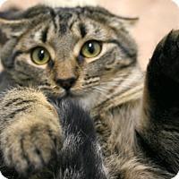 Adopt A Pet :: Grumpy VALENTINE'S SPECIAL! 50 - Republic, WA