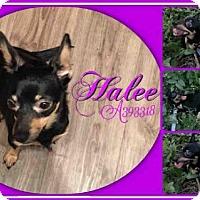 Adopt A Pet :: HALEE - San Antonio, TX