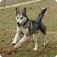 Adopt A Pet :: Hot Stuff in Texarkana, TX - Texarkana, TX