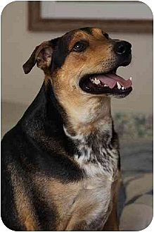 Shepherd (Unknown Type) Mix Dog for adoption in Ponca City, Oklahoma - Wynter
