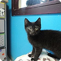 Adopt A Pet :: Houdini - MADISON, OH