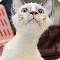 Adopt A Pet :: Lemmy - Irvine, CA