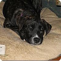 Adopt A Pet :: Ida - Rome, NY