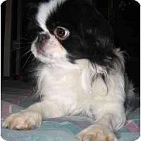 Adopt A Pet :: Keiko - Mays Landing, NJ