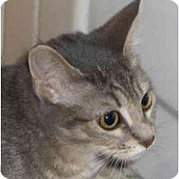 Adopt A Pet :: Tea - Richmond, VA