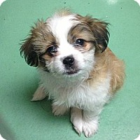 Adopt A Pet :: Alana - New York, NY