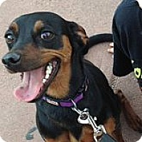 Adopt A Pet :: Sadie - Colorado Springs, CO