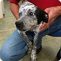 Adopt A Pet :: Willamina - Southampton, PA