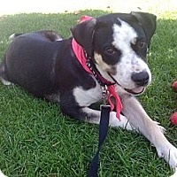 Adopt A Pet :: Quincy - Los Angeles, CA