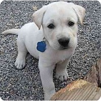 Adopt A Pet :: Conner - Golden Valley, AZ