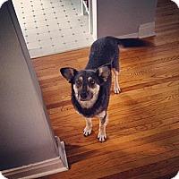 Adopt A Pet :: Sadie - Saskatoon, SK