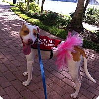 Adopt A Pet :: Summer - Jupiter, FL