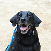 Adopt A Pet :: Kova~FOSTER NEEDED!!! - Shrewsbury, NJ