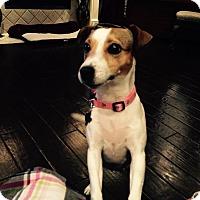 Adopt A Pet :: Lizzy In Dallas - Dallas/Ft. Worth, TX