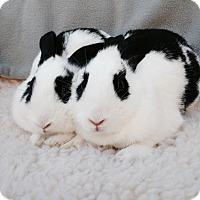 Adopt A Pet :: Jade & Juliet - Watauga, TX