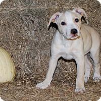Adopt A Pet :: Holliday - Baton Rouge, LA