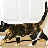 Adopt A Pet :: Frangelica - Davis, CA