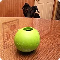 Adopt A Pet :: Mason - Buffalo, MN
