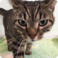 Adopt A Pet :: Charlie - Diamond Springs, CA