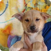 Adopt A Pet :: Venus - Oviedo, FL
