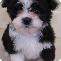 Adopt A Pet :: LOLA - Corona, CA
