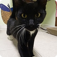 Adopt A Pet :: K Bear - Elyria, OH