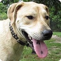 Adopt A Pet :: D.B. COOPER - Jackson, MO