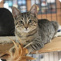Adopt A Pet :: Hamilton - Carlisle, PA