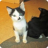 Adopt A Pet :: Bessie - Mebane, NC