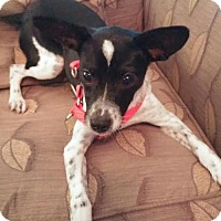 Adopt A Pet :: Cagney - Christiana, TN