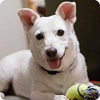 Adopt A Pet :: Noelle - Austin, TX
