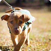 Adopt A Pet :: Marco - Woodstock, GA