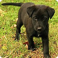 Adopt A Pet :: Jena - Brattleboro, VT