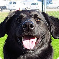 Adopt A Pet :: Bentley - Meridian, ID