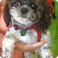 Adopt A Pet :: Ramen - Encinitas, CA