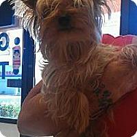 Adopt A Pet :: MacGregor - handsome 6 lbs! - Phoenix, AZ