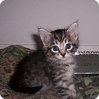 Adopt A Pet :: Sarah - Orlando, FL