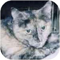 Adopt A Pet :: Lu - Lombard, IL