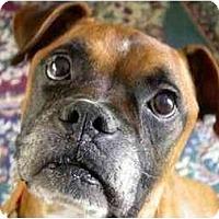 Adopt A Pet :: Hemi - Albany, GA