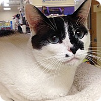 Adopt A Pet :: Bunny - Foothill Ranch, CA