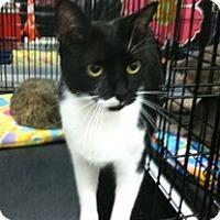 Adopt A Pet :: Wild Flower - Harrisburg, NC